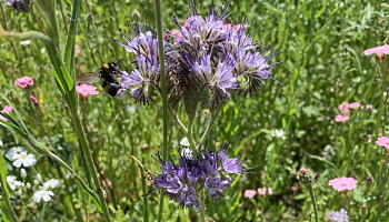 Blüten und Insekten