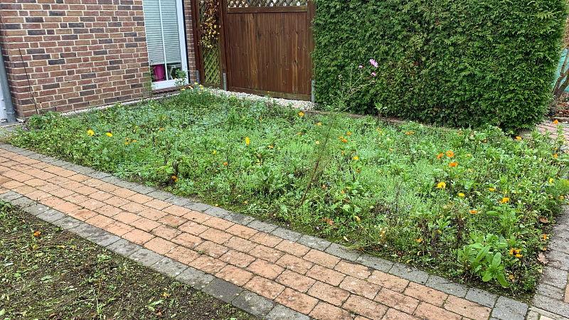 Blumenwiese - Erste Blumen wachsen schon wieder