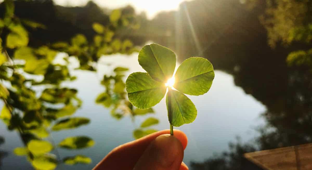 kundenzufriedenheit – Klee in der Sonne