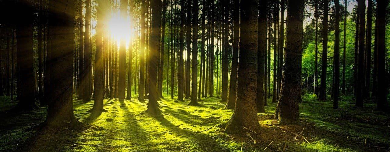 Am 21. März ist der Tag des Waldes