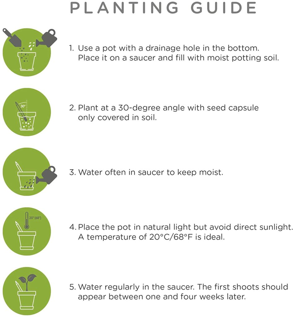 Sprout Planting Guide
